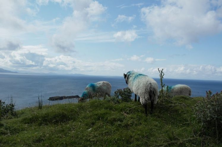 Irlande - Comté Mayo - Découvrir l'Irlande H