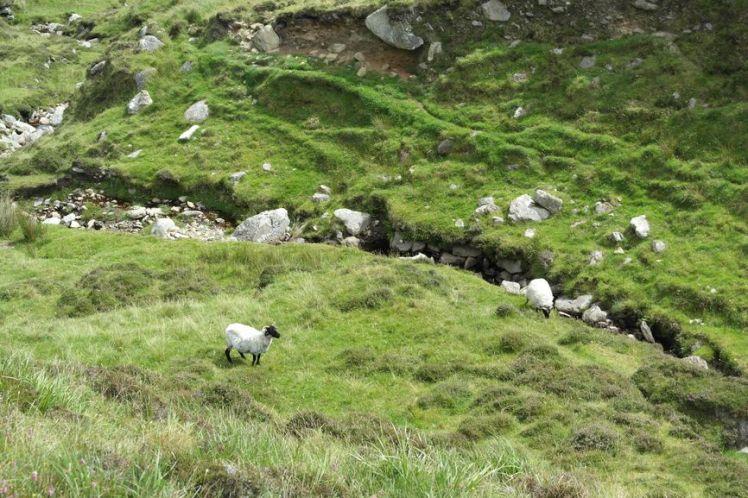 Irlande - Comté Mayo - Découvrir l'Irlande T