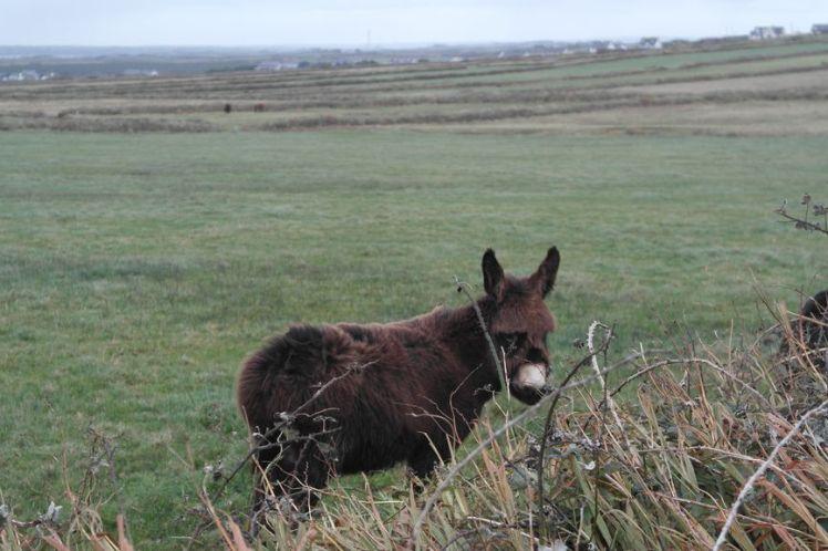 Ireland - County Clare - Vernie Par La Vie N