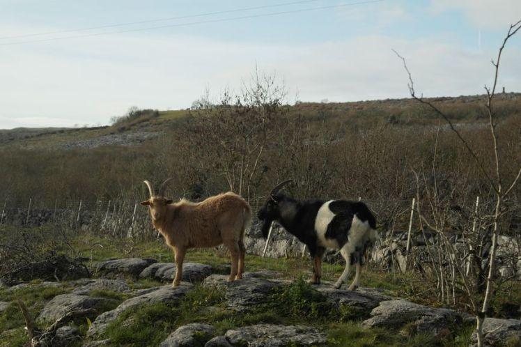 Ireland - County Clare - Vernie Par La Vie ZB
