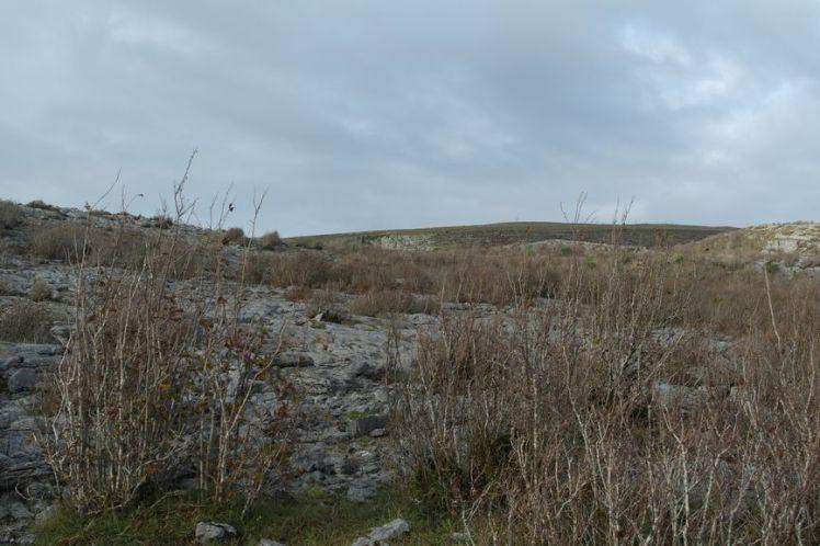Ireland - County Clare - Vernie Par La Vie ZK