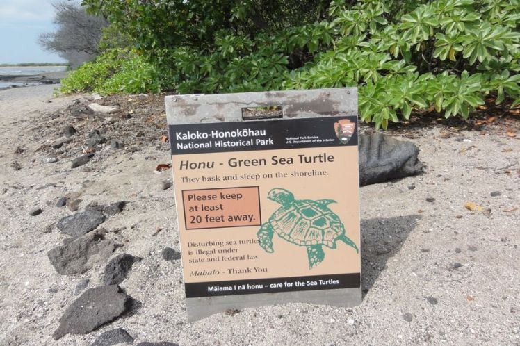 Voyage de noces à Hawaï - Big Island - Vernie par la Vie - J - Honokohau National Park