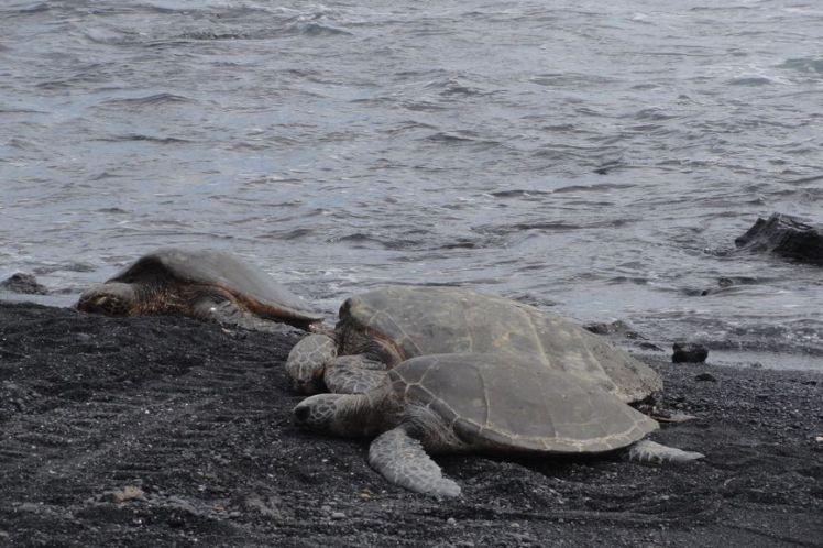 Voyage de noces à Hawaï - Big Island - Vernie par la Vie - T - Black Sand Beach