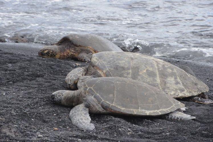 Voyage de noces à Hawaï - Big Island - Vernie par la Vie - U - Black Sand Beach