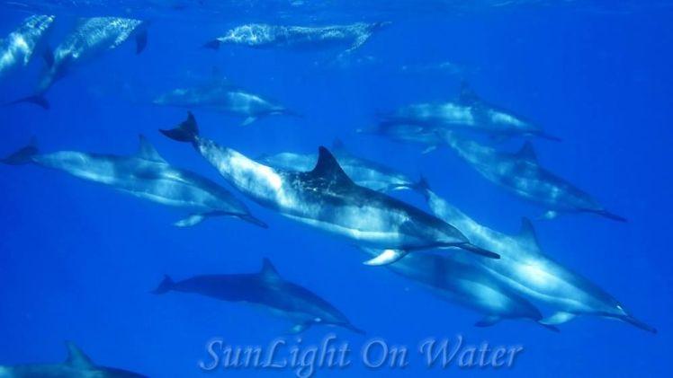 Voyage de noces à Hawaï - Big Island - Vernie par la Vie - ZI - Sunlight on Water Big Island