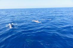 Voyage de noces à Hawaï - Big Island - Vernie par la Vie - ZL - Sunlight on Water Big Island