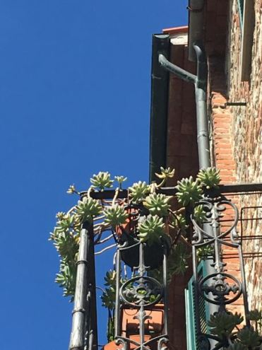 italie-toscane-baratti-suvereto-serraiola-alta-vernie-par-la-vie-w