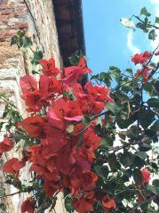 italie-toscane-baratti-suvereto-serraiola-alta-vernie-par-la-vie-z