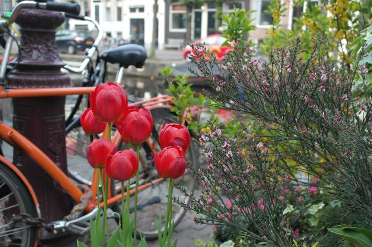 Amsterdam - Séjour Netherlands K